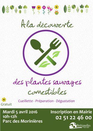 A la découverte des plantes sauvages comestibles
